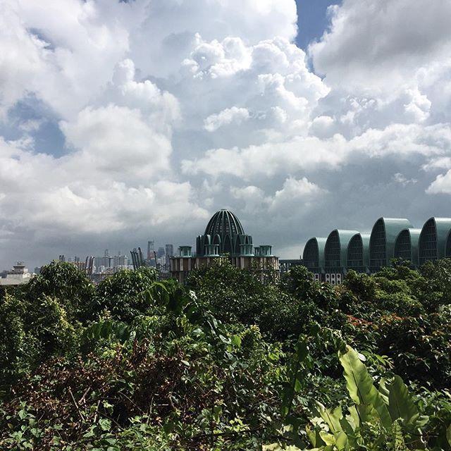 シンガポールに来ています。まことに勝手ながらオンラインストアでの発送は2/8以降となります。何卒ご了承くださいますようお願い申し上げます。暑いー!
