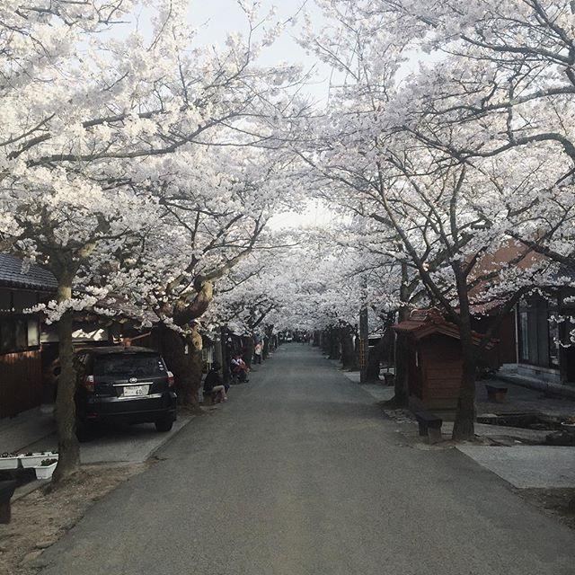 お店の前は桜並木