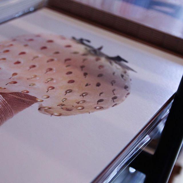 MAKOTO OONO / SEPARATE HIDDEN RULES インターネットで購入した「生物」を日常に投下。 写真によってその生物たちを採取する。 今作は作者が意図的に仕掛けたSEPARATE HIDDEN RULESという名の罠の集積です。 YUYBOOKSではお買い上げの方に当店だけの特別写真をお付けしています。