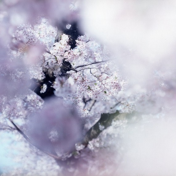 [ event ]8/5(土)〜8/13(日)まで写真家鈴木理策さん新作写真集「SAKURA」の先行販売とトークイベントをkumagusukuで行います。トークイベントは8/5(土)です。ぜひみなさま遊びにいらしてください。かき氷もたべれます!http://kumagusuku.info/425
